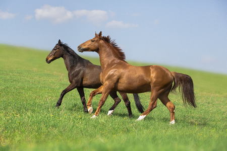 two horses run on the green field