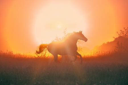 het paard galopperen op de zonsopgang Stockfoto