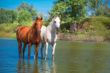 two horses are staying in the blue water Banco de Imagens - 43607376