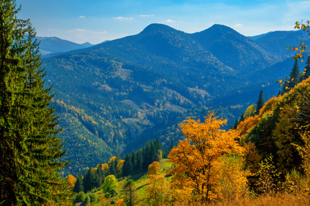 Autumn in the Carpathian mountains with yellow tree Stock Photo