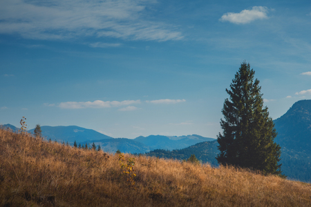 Autumn in the Carpathian mountains. Big fir on mountains and sky background