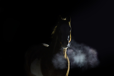 Portrait of red horse with steam of breath on dark background