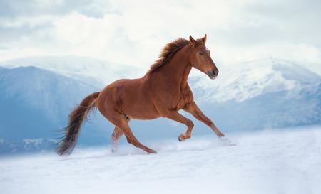 Rode paardlooppas op sneeuw op bergenachtergrond
