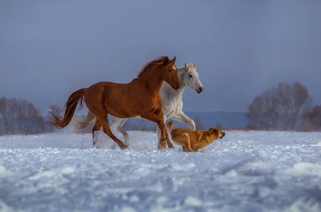red and white horse and red dog run on snow on trees and sky background
