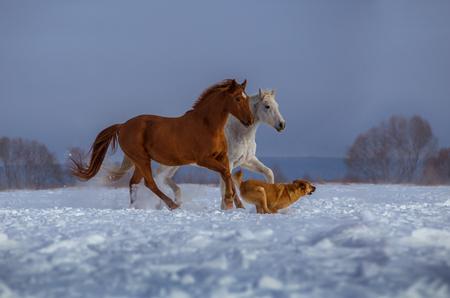 Rode en witte paard en rode hond lopen op sneeuw op bomen en hemelachtergrond