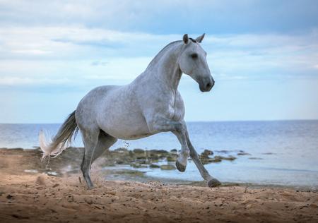 Wit paard loopt op het strand op de zee en clougs achtergrond