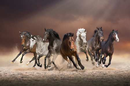 Herd of horses run forward on the sand in the dust on evening sky background