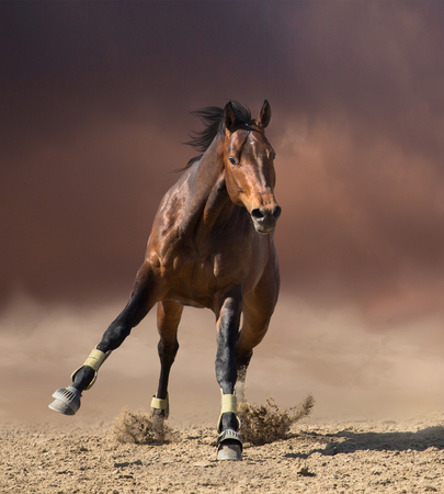 Bay horse jumps on dark clouds and dust background Stock Photo