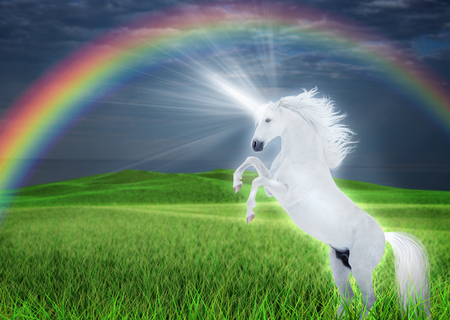 Dazzling white unicorn reared on a green meadow against a of a stormy sky under a rainbow