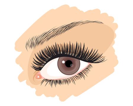 brown eye: Vector illustration of a girls brown eye Illustration