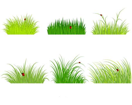grass: illustration of a six green grass set Illustration