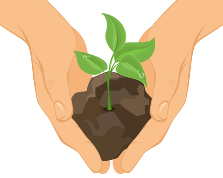 seedlings: illustration of a green sprout in hands
