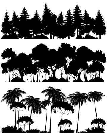 coniferous tree: Vector illustration of a three forests silhouettes