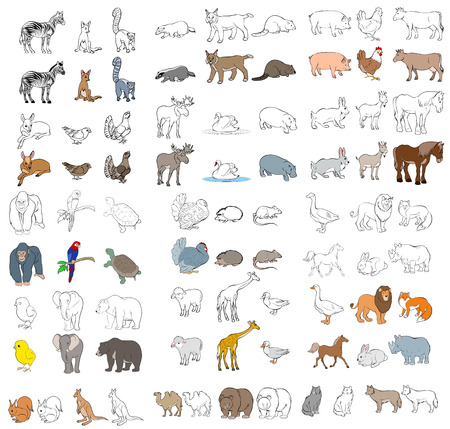 lion and lamb: Vector illustration of a different animals set
