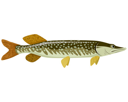 Vector illustration of a big green pike