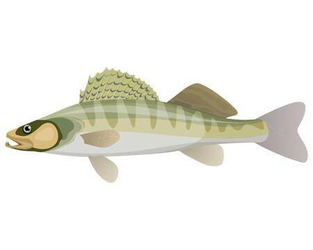 Vector illustration of a big wild fish