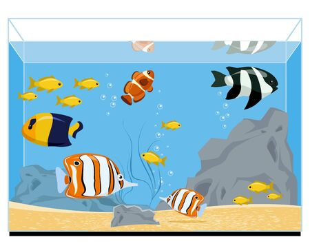 Vector illustration of a exotic fishes in aquarium Illustration
