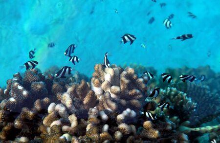 Underwater world at Maldives. photo