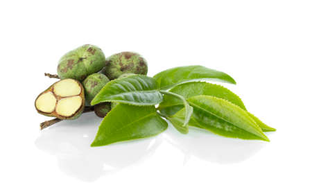 Green tea leaf with tea seeds isolated on white background 免版税图像