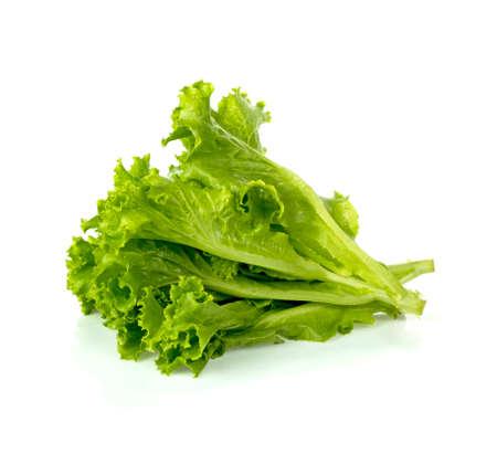 Green oak lettuce on white background. 免版税图像