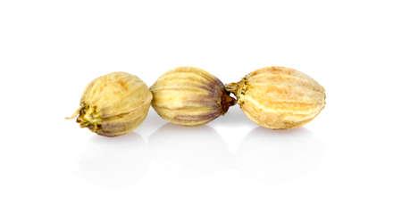 Coriander seeds isolated on white background macro lens. 免版税图像