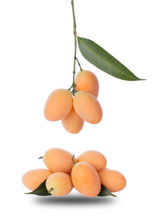 Marian Plum or Plum Mango is a bunch on a white background, sweet marian plum thai fruit isolated on white background 免版税图像 - 148685713