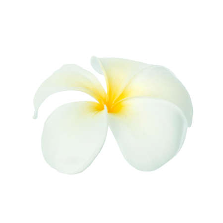 Frangipani flower isolated on white background.