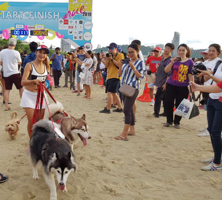 PATTAYA, THAILAND - JUNE 8, 2019: runner with her dog, participant of Pattaya Bikini Run 2019 in Pattaya, Thailand on JUNE 8, 2019