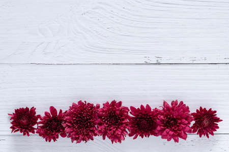 fresh red flowers over white wooden table background. backdrop with copy space