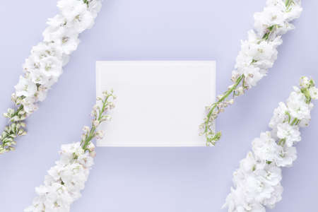 flat lay of luxury blank greeting card decorate with white flower isolated on pastel color background