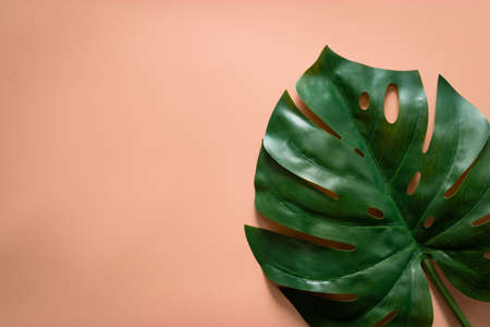 green tropical leaves monstera on orange pastel background with copy space. flat lay, top view