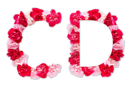 flower font alphabet C D set (collection A-Z), made from real Carnation flowers pink, red color with paper cut shape of capital letter. flora font for text, typography decoration isolated on white 写真素材