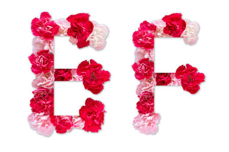 flower font alphabet E F set (collection A-Z), made from real Carnation flowers pink, red color with paper cut shape of capital letter. flora font for text, typography decoration isolated on white 写真素材