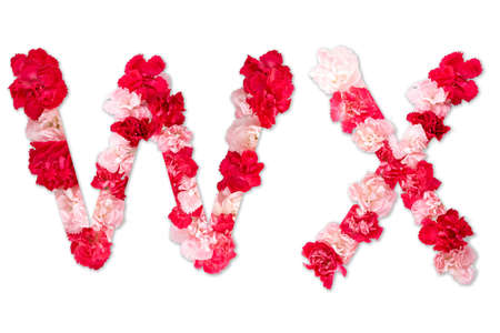flower font alphabet W X set (collection A-Z), made from real Carnation flowers pink, red color with paper cut shape of capital letter. flora font for text, typography decoration isolated on white
