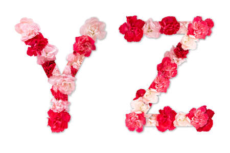 flower font alphabet Y Z set (collection A-Z), made from real Carnation flowers pink, red color with paper cut shape of capital letter. flora font for text, typography decoration isolated on white Zdjęcie Seryjne