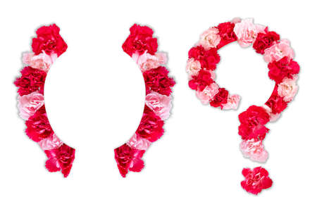 flower font for symbol bracket, question mark (collection alphabet A-Z set), made from real Carnation flowers pink, red color with paper cut shape of capital letter. flora font for text, typography
