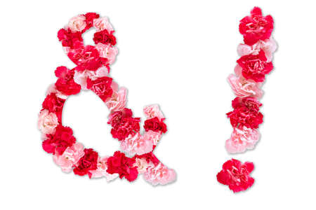 flower font for symbol exclamation mark, ampersand(and) (collection alphabet A-Z set), made from real Carnation flowers pink, red color with paper cut shape of letter. flora font for text, typography