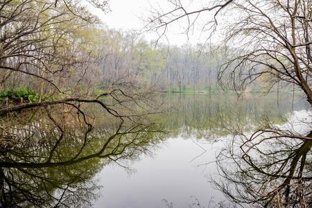 arboles secos: encantador lago con �rboles muertos Foto de archivo