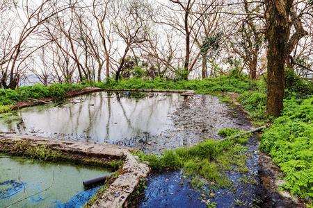arboles secos: pantano sombrío con árboles muertos Foto de archivo