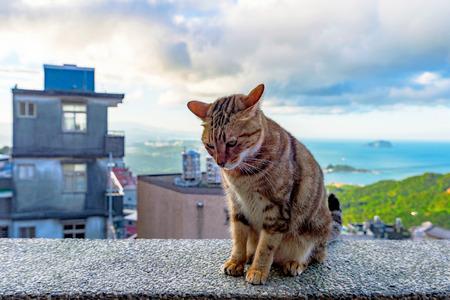 Stray cat sittin on a wall in Jiufen village Taiwan