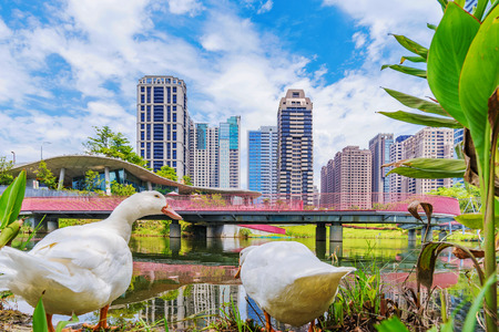 TAICHUNG, TAIWAN - JULY 18: Ducks by a lake in Maple Garden a park in the downtown financial district of Taichung on July 18, 2017 in Taichung