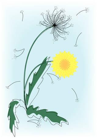 premise: Blooming flower, dandelion. Vector illustration.