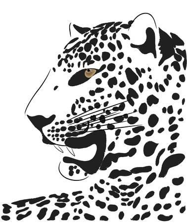 toughness: Vector bella tigre  Vettoriali