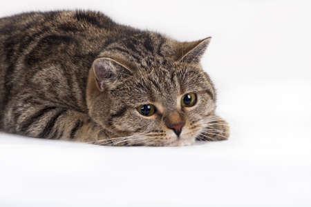 brit: Pet Photo Stock Photo