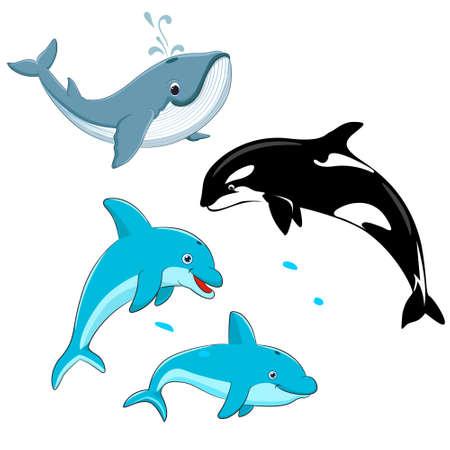 Ensemble de baleines et de dauphins vectoriels. Illustration vectorielle de mammifères marins, tels que la baleine bleue, le dauphin, l'épaulard.