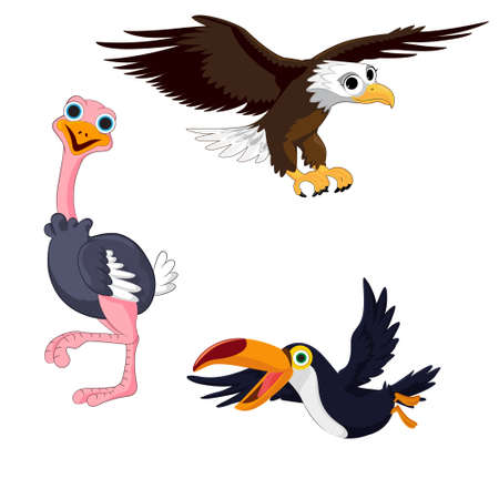 Illustration of three birds toucan, eagle and ostrich on a white background. Vector