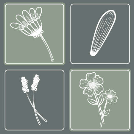 Set of 4 Floral Patterns with hand drawn flowers. Vector sketching 向量圖像