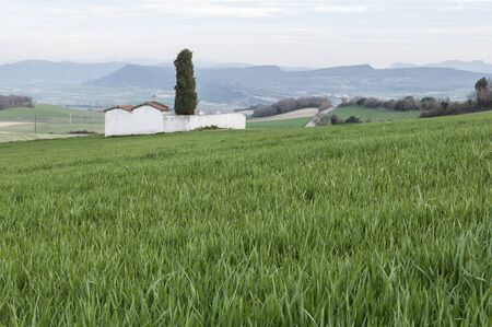 alava: White Cemetery in a wheat field in the Basque Country Stock Photo