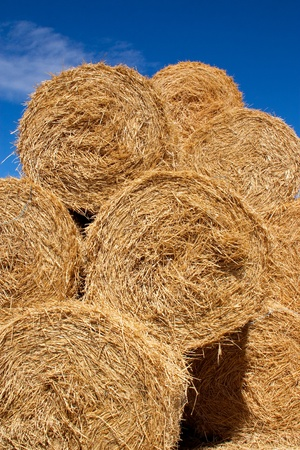 Round bales of straw in a stack against a blue sky Stock Photo - 15439344
