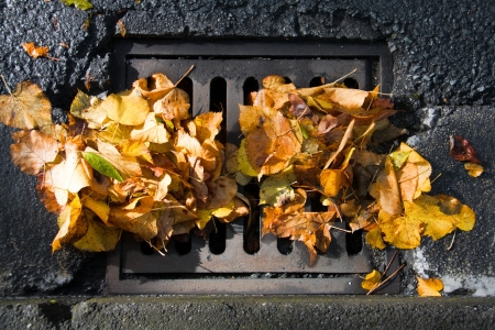 Sewer grate clogged with fallen leaves after an autumn storm